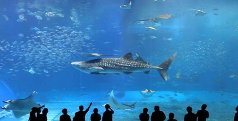 aquario-okinawa