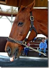 KY horse park 086