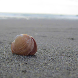 Seashell by Amy Parson - Nature Up Close Sand