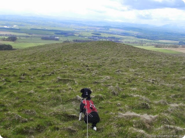 lucky sniffs the view