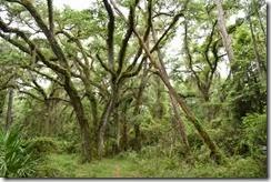 Fern covered tree
