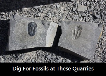 dig-fossils