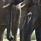 Camelthorn Lodge, Hide, Elefanten © Foto: Ulrike Pârvu | Outback Africa Erlebnisreisen