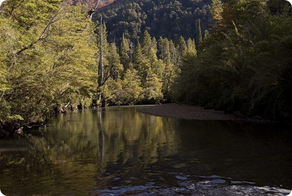 -Parque-Nacional-Los-Alerces-Alerzal_thumb[2]