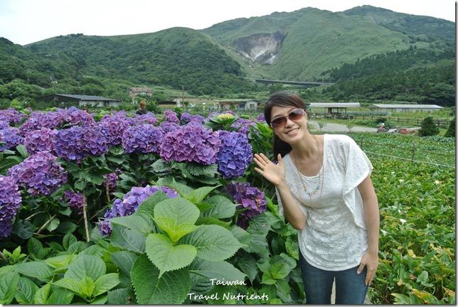 陽明山繡球花 (38)
