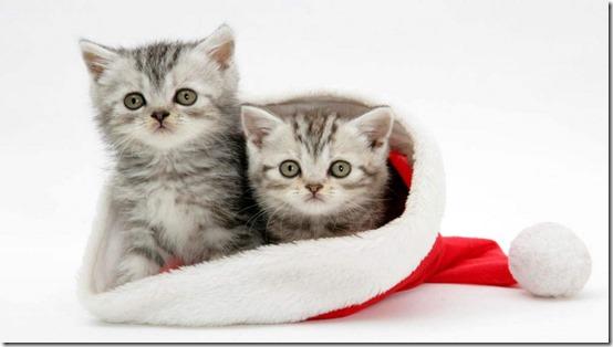 77- gatos navidad (12)- buscoimagenes