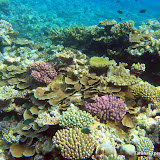 CoralGardensOfTonga