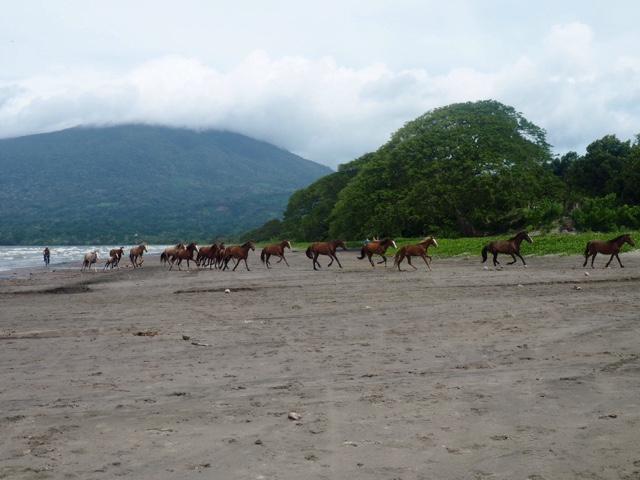 Horses on Santo Domingo beach, Ometepe Island, Nicaragua