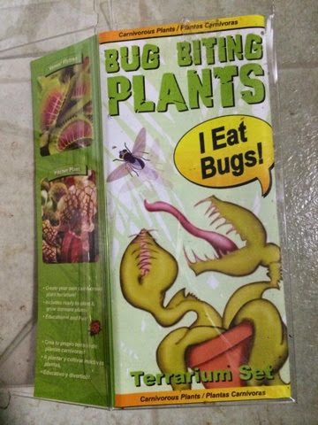 Hooray Plants Bug Biting Plants Terrarium Kit From Lowe S