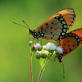January In Love by Said  Ikhsan - Animals Insects & Spiders ( macro, nature )