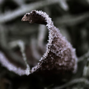 Icy Leaf by Alina Jumabhoy - Nature Up Close Leaves & Grasses