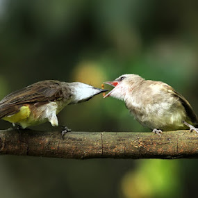 it's time for eat by Yan Abimanyu - Animals Birds