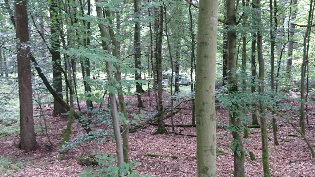 ruisseau - Ruisseau Ardennais confidentiel Upload_-1