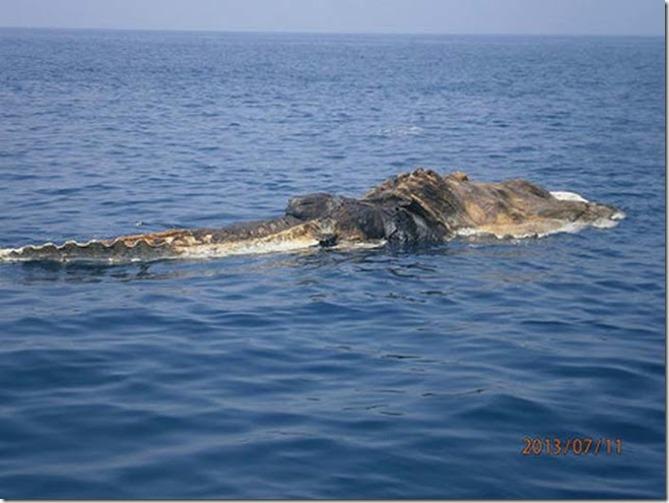 extraña criatura golfo persico 3