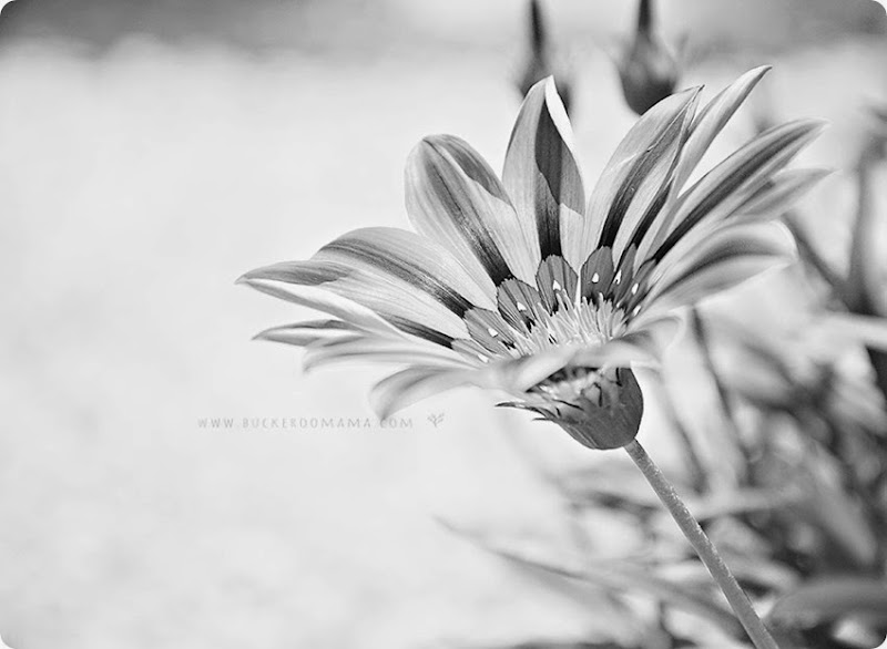 Yellow flower-bw (1)