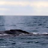 Baleias! - Leão Adormecido - Galápagos