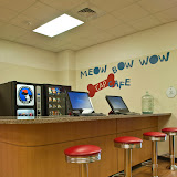 meow bow wow cafe new shelter.JPG