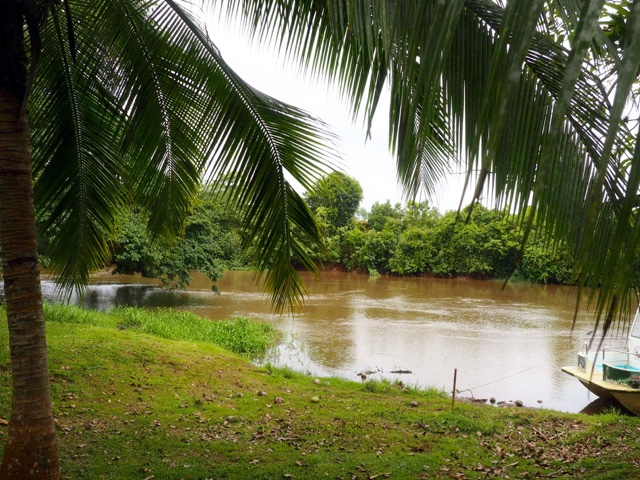 View of river and palm trees at Caño negro outside La Fortuna, Costa Rica