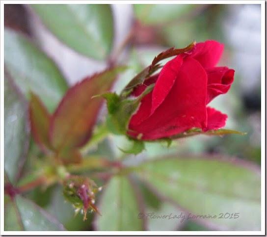 04-27-unkn-red