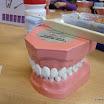ALLE: Zahngesundheit 2015