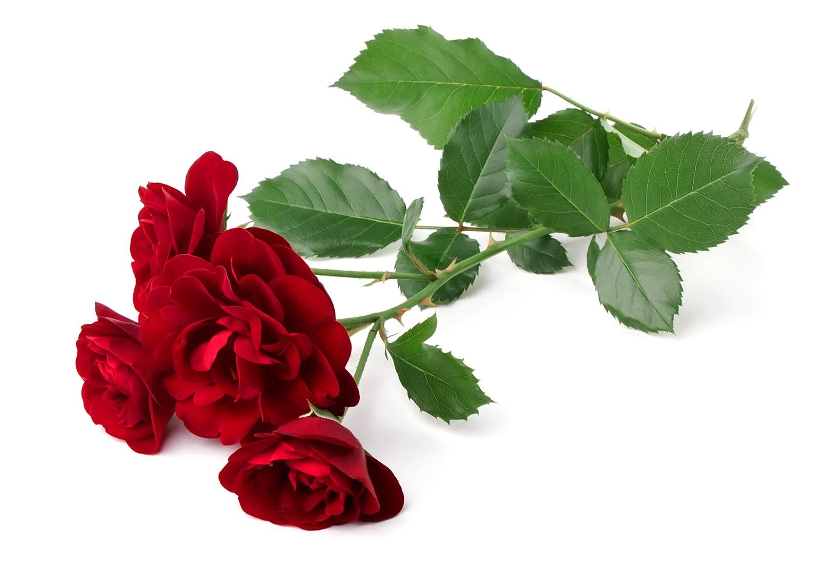 Descarga Imágenes de Rosas » Amor de Imagenes