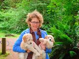 Labradoodle Breeder  Melanie's GorgeousDoodles