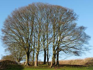 Copse of trees.