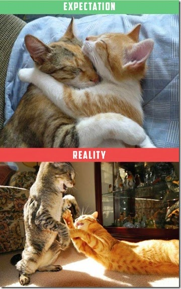 cats-expectations-reality-009