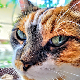 { Snoopy in the morning }  by Jeffrey Lee - Animals - Cats Portraits ( { snoopy in the morning } )