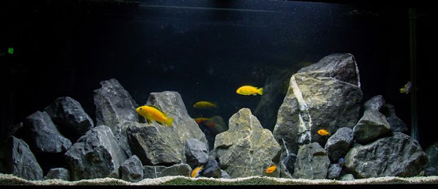 Image of Rocks for aquarium