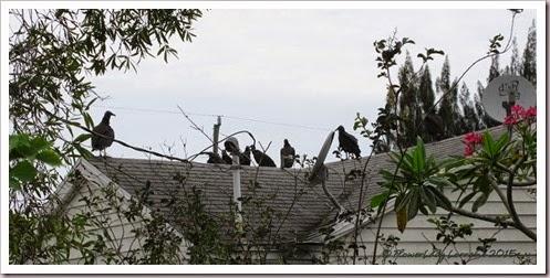 04-30-buzzards3