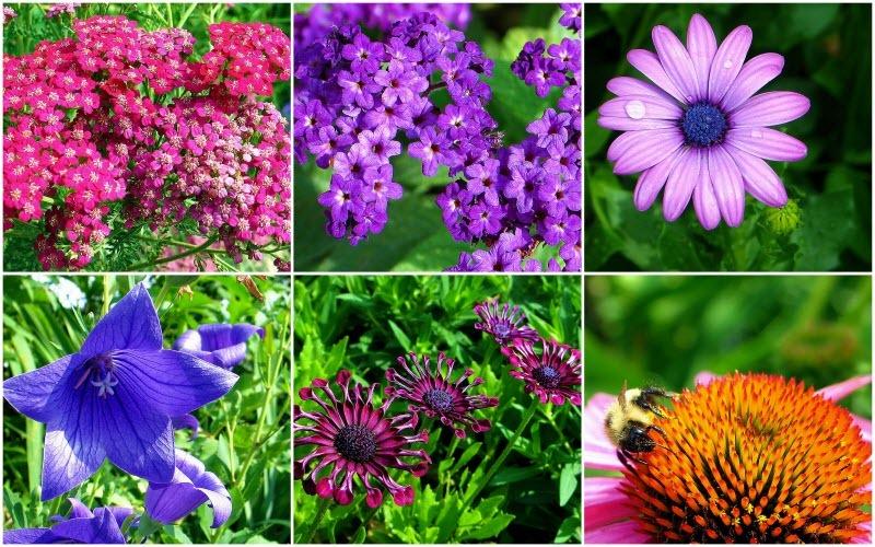 shelburne-bridge-of-flowers-10