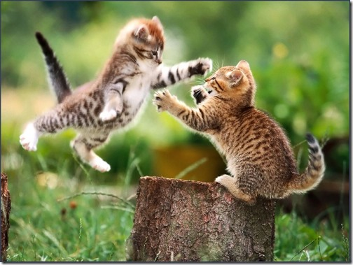1123cute-cats-wallpapers-background-113