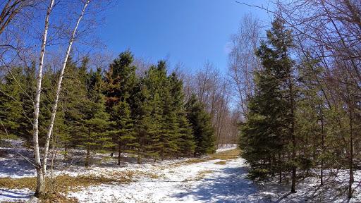 Skinny field pines