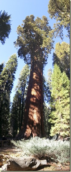Sequoia NP Sherman Tree_1