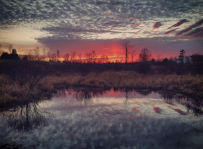 Photo Captured with Samsung Galaxy S5 and edited on phone with Instagram by Chris Gardiner Photography www.cgardiner.ca