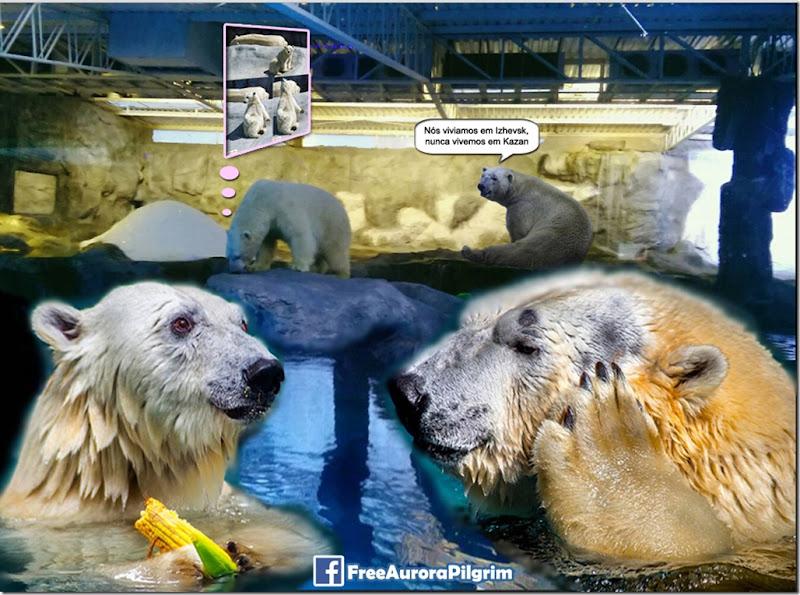 ursos-polares-aquario