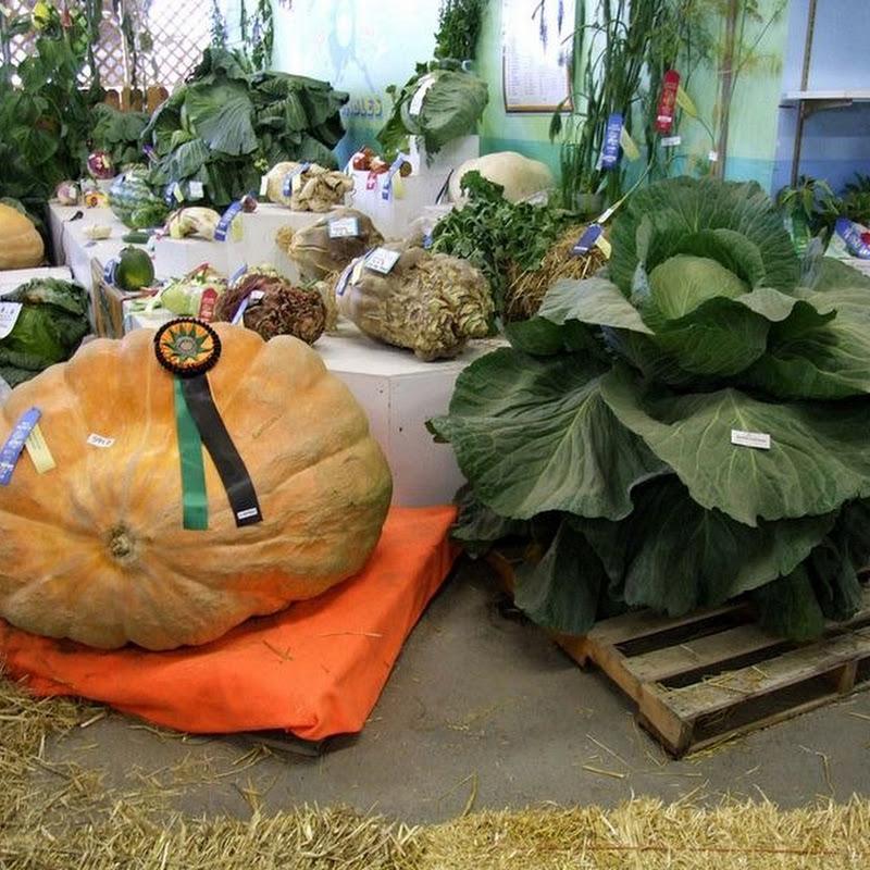 Alaska's Giant Vegetables