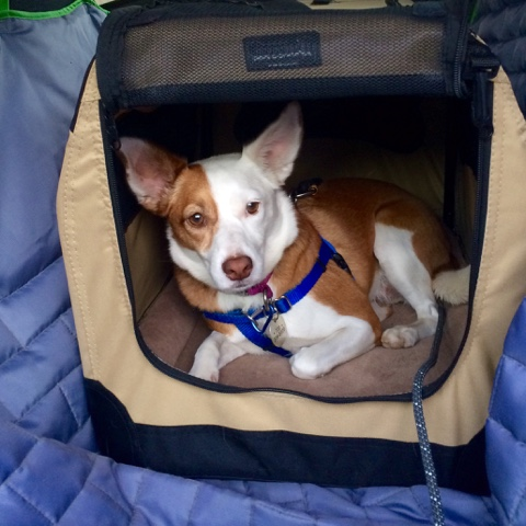 dog in a travel crate