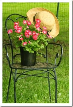courtyard.chair and flowers 041