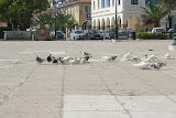 Duiven op een plein in Zakynthos-Stad.