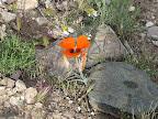 Mariposa - Oracle's AZ Trail 4/16