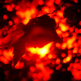 Embers by Debb Rooken-Smith - Nature Up Close Leaves & Grasses ( ir, england, uk, red, infra-red, yellow, leaf, leaves, black, sun )