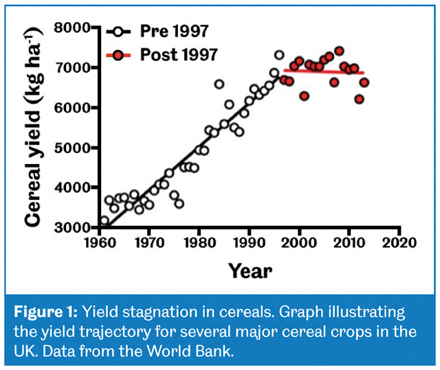 Yield stagnation in cereals. This graph illustrates the yield trajectory for several major cereal crops in the UK. Data from the World Bank. Graphic: Grantham Centre