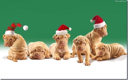 perro navidad (12)
