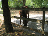 A horse at the old farm at the Nashville Zoo 09032011