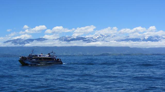 One of the Whale Watch Kaikoura boats.