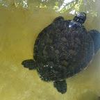 Local Ocean Trust, kranke Schildkröte © Foto: S. Schlesinger | Outback Africa Erlebnisreisen
