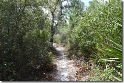 Trail through the scrub