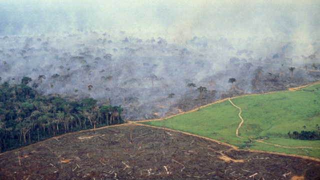 Stages of deforestation. An aerial view shows four stages in land management on a farm in the Amazon: A wedge of natural forest. To its right, a swath of forest being burned. Left foreground, land cleared by burning. Right, a pasture for cattle. Photo: Brazil Photos / LightRocket
